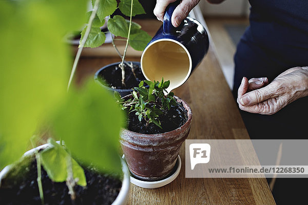 Midsection of retired senior woman watering potted plants on kitchen counter at home