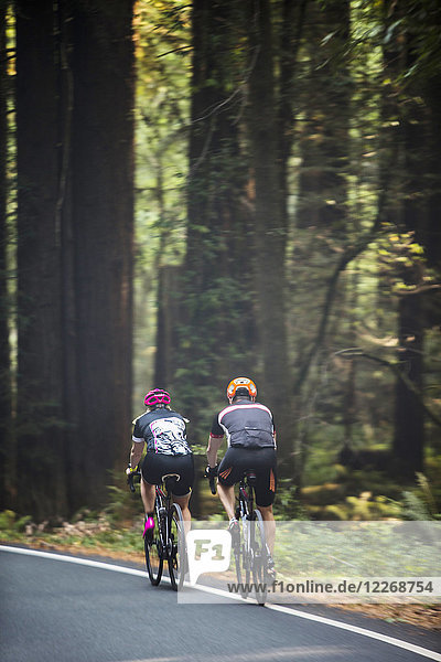Rear view of two cyclists riding on road through forest