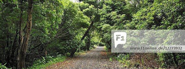 Walking trail in the Graciosa Nature Park  Graciosa island. Azores. Portugal.