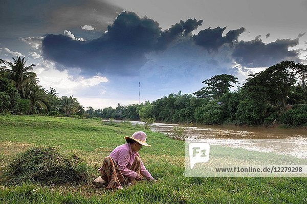 Khmer woman cutting grass on a bank of the Sangke river. Cambodia.