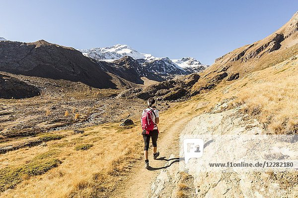 Hiker on footpath with Zufallspitze in the background  Val Martello  Venosta Valley  province of Bolzano  South Tyrol  Italy.
