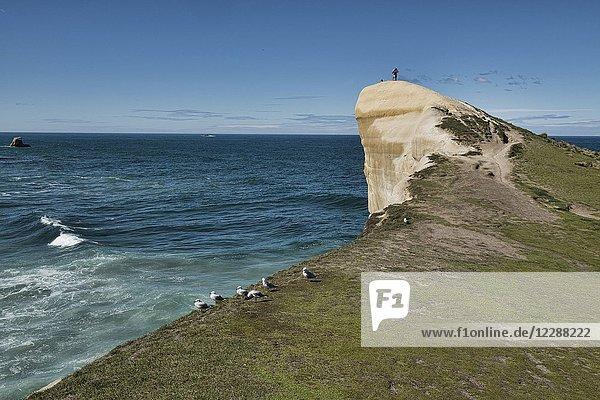 Sandstone cliff at Tunnel Beach  Dunedin  New Zealand.