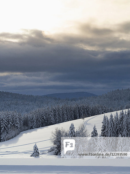 Scenic view of Ski track Thurnerspur in the Black Forest near St. Märgen  Hochschwarzwald  Baden-Württemberg  Germany