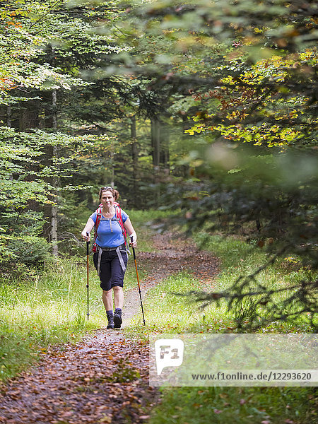 Woman on hiking tour in the Northern Black Forest  Bad Wildbad  Baden-Württemberg  Germany