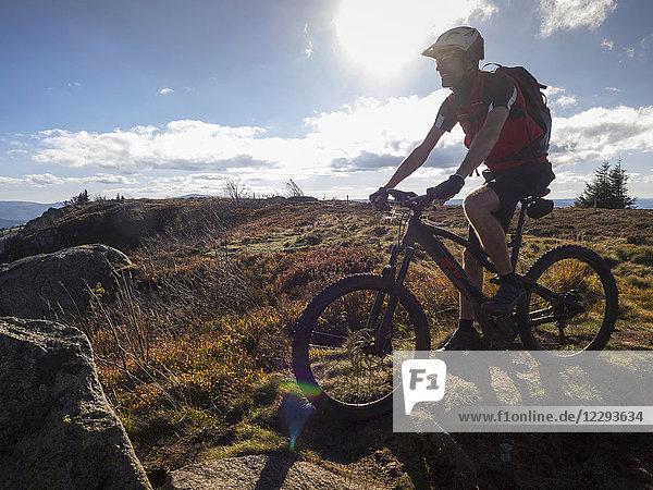 Mountain biker cycling on single trail on Ringelbuhlkopf  Alsace  France