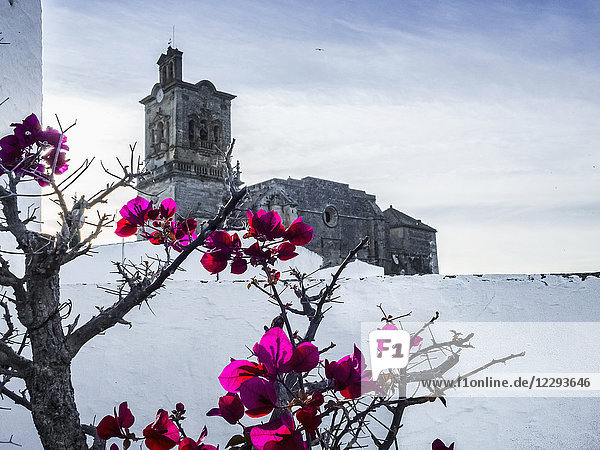 Church of Arcos de la frontera with flowers blooming in foreground