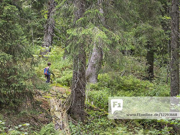 Girl hiking on single trail in black forest  Feldberg  Baden-Württemberg  Germany