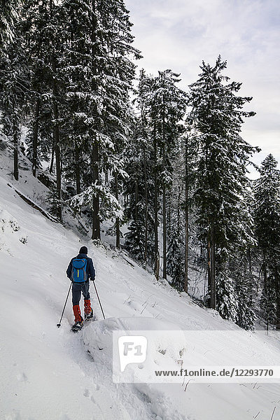 Man hiking with snowshoes in the Black forest  Mount Kandel  Baden-Württemberg  Germany