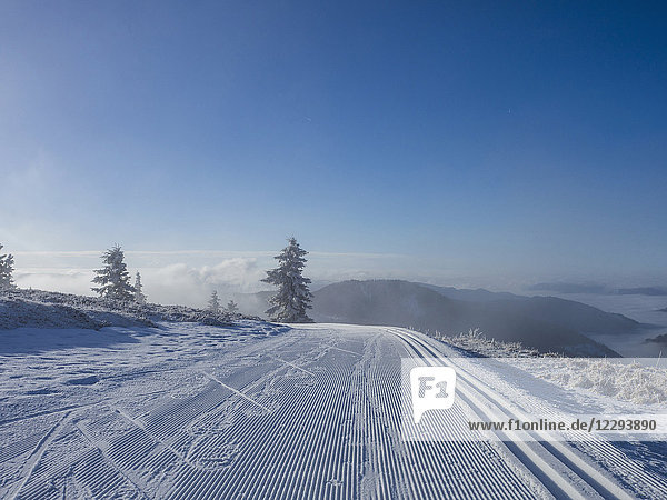 Cross country skiing track on winter landscape  Black Forest  Mount Feldberg  Germany