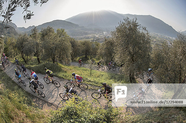 Group of mountain bikers in action during marathon competition in olive grove  Trentino  Italy