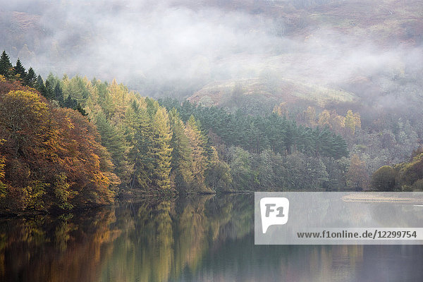 Mysterious fog over tranquil autumn trees and lake  Loch Faskally  Pitlochry  Scotland