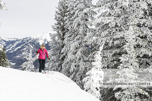 Adult woman skiing beside snow-covered trees in La Plata Mountains  Durango  Colorado  USA