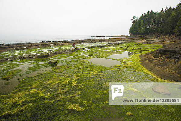 A young woman hikes along the continental shelf during low tide along the West Coast Trail  Pacific Rim National Park on Vancouver Island  British Columbia  Canada