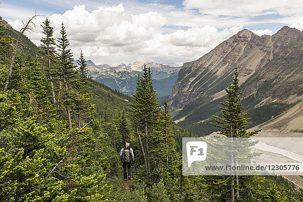 Rear view shot of man hiking through evergreen tree forest on mountainside in Banff National Park  Alberta  Canada
