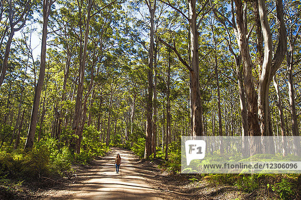 Distant view of woman walking along dirt road in Boranup Forest  Leeuwin Naturaliste National Park  Western Australia