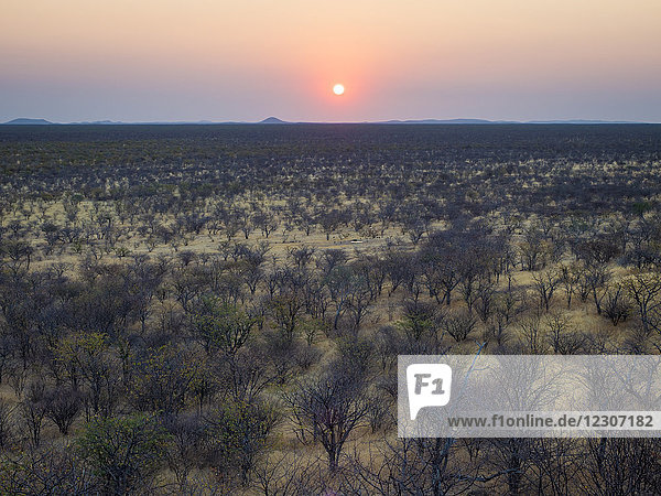 Afrika  Namibia  Damaraland  Sonnenuntergang über Buschland