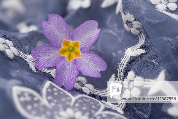 Primelblüte auf floral gemustertem Stoff  Nahaufnahme