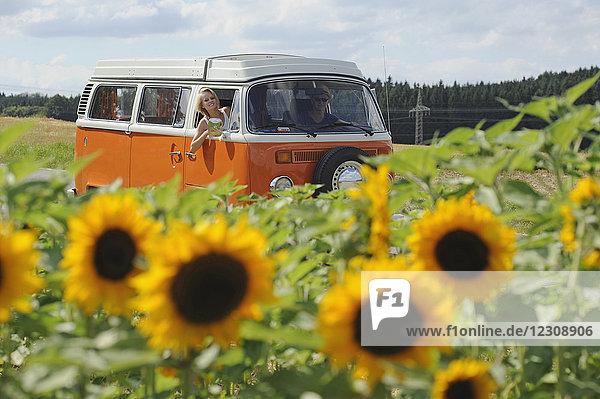 Paar im alten Wohnmobil beim Durchfahren des Sonnenblumenfeldes