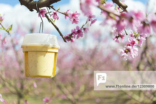 Ecologic Schädlingsbekämpfung für Obstbäume