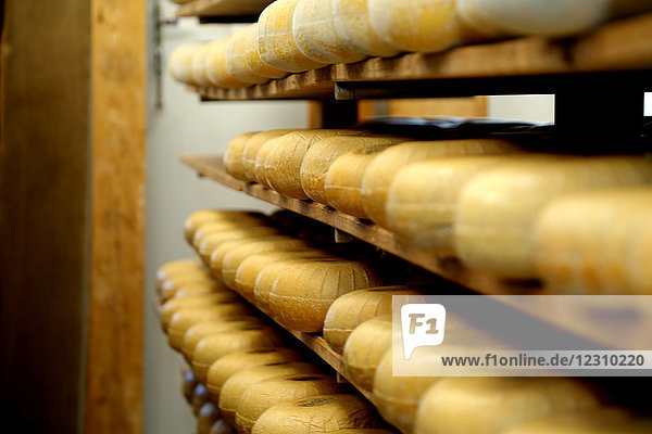 Shelves of hard cheeses stored to mature in ageing room