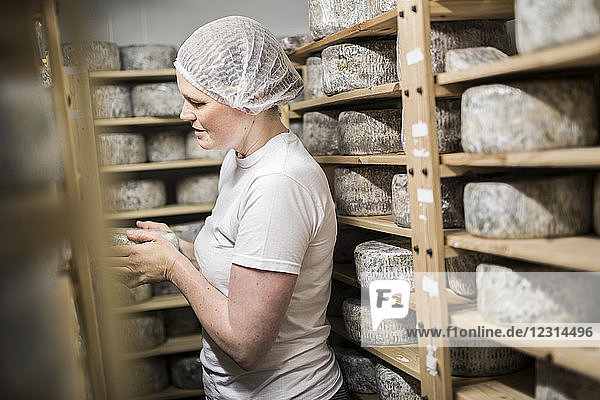 Woman putting cheese on maturing rack Woman putting cheese on maturing rack