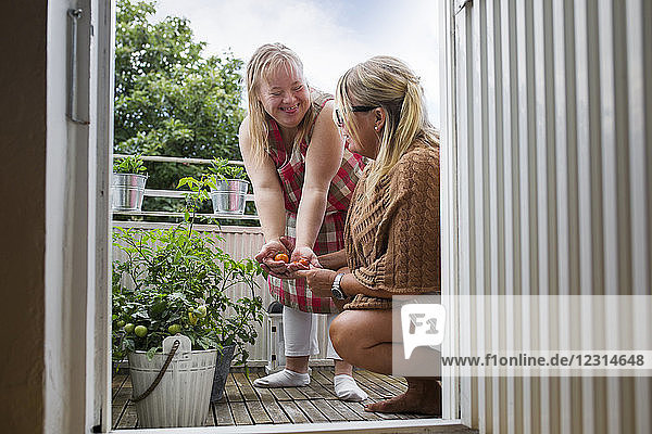 Mother and daughter with down syndrome picking cherry tomatoes on balcony