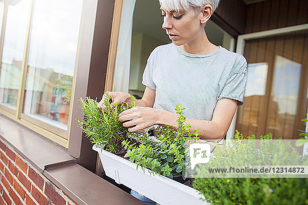 Woman checking herbs on balcony