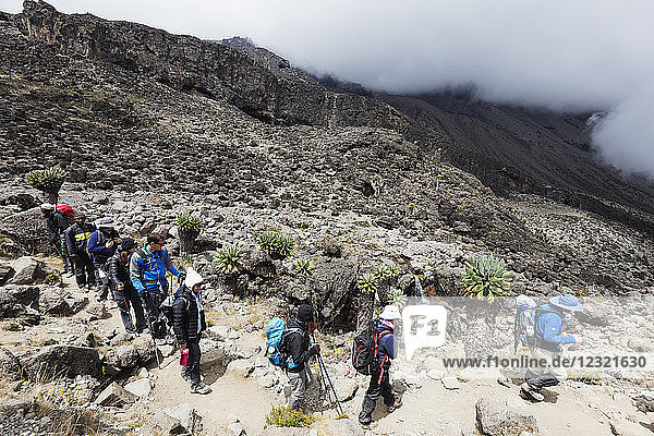 Hikers on a trail  Kilimanjaro National Park  UNESCO World Heritage Site  Tanzania  East Africa  Africa