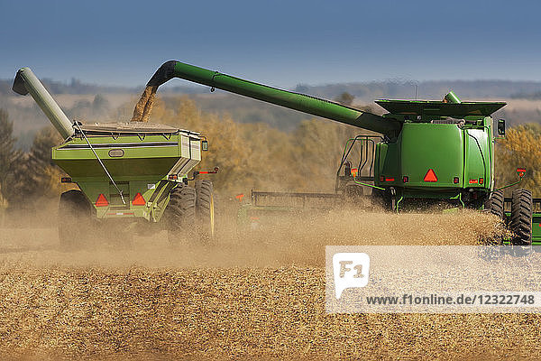 Combine picking beans during soybean harvest  near Nerstrand; Minnesota  United States of America