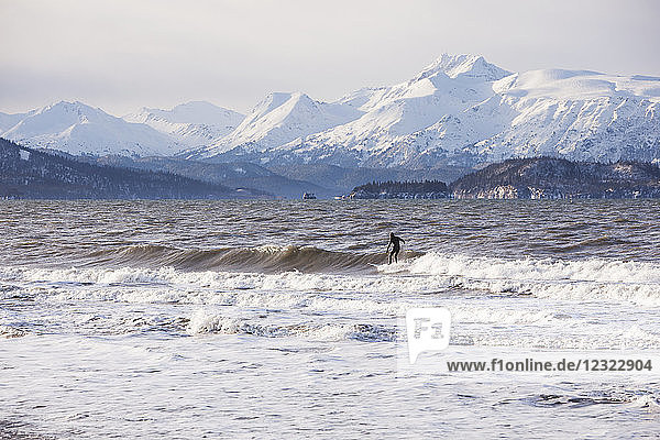 Surfer in Kachemak Bay  South-central Alaska; Homer  Alaska  United States of America