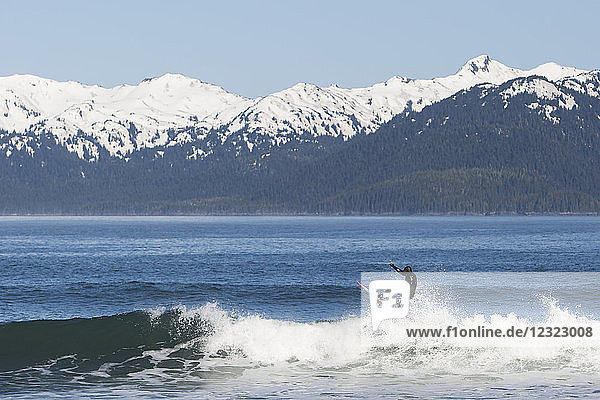 Surfer riding a wave on the Kenai Peninsula Outer Coast  South-central Alaska; Alaska  United States of America