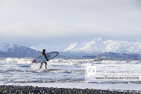 Surfer with surfboard entering Kachemak Bay  South-central Alaska; Homer  Alaska  United States of America