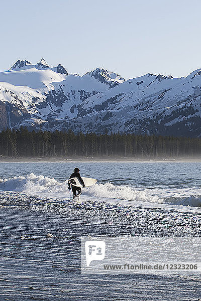 Surfer walking into the ocean along the Kenai Peninsula Outer Coast  South-central Alaska; Alaska  United States of America