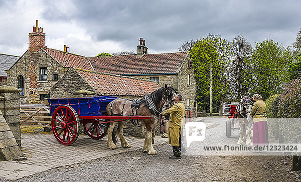 Horses with colourful carts and people tending to them  Open Air Museum; Beamish  County Durham  England