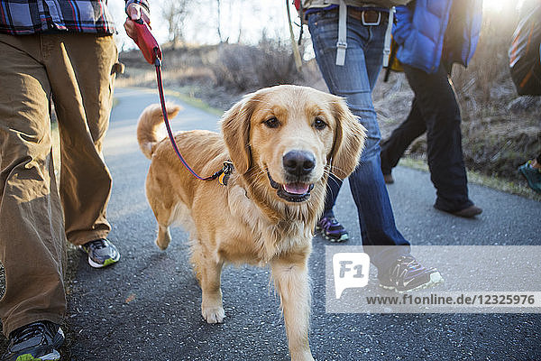 People walking on a trail with a dog; Anchorage  Alaska  United States of America
