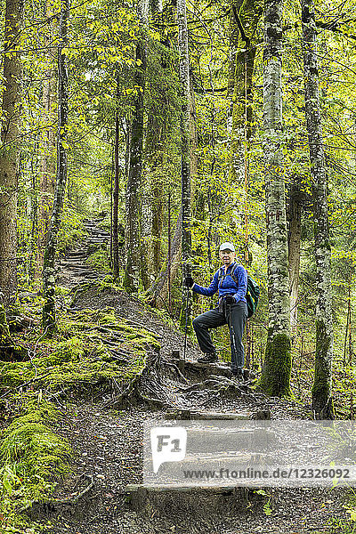 Female hiker climbing a series of logged wooden steps on a steep forest trail; Grainau  Bavaria  Germany