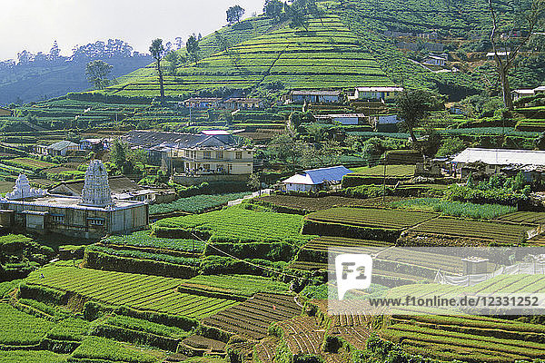 Sri Lanka  Nuwara Eliya  tea plantation  landscape  scenery