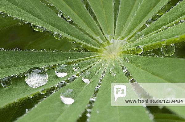 Raindrops on leaf  close-up