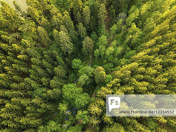 Germany  Bavaria  Aerial view of forest