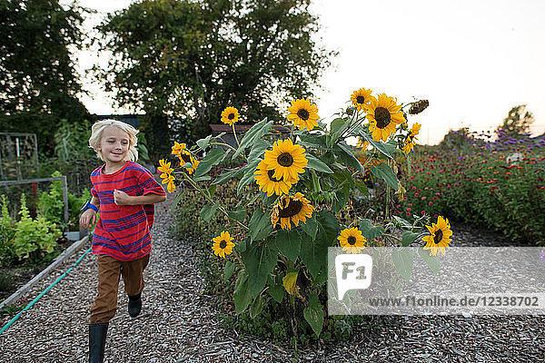 Blondhaariger Junge rennt im Garten an Sonnenblumen vorbei