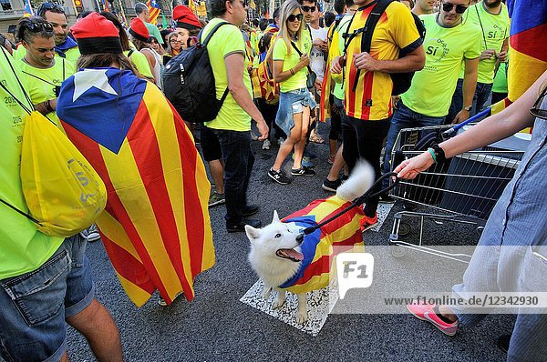 Dog. Political demonstration for the independence of Catalonia. Estelades  Catalan independent flags. October 2017. Barcelona  Catalonia  Spain