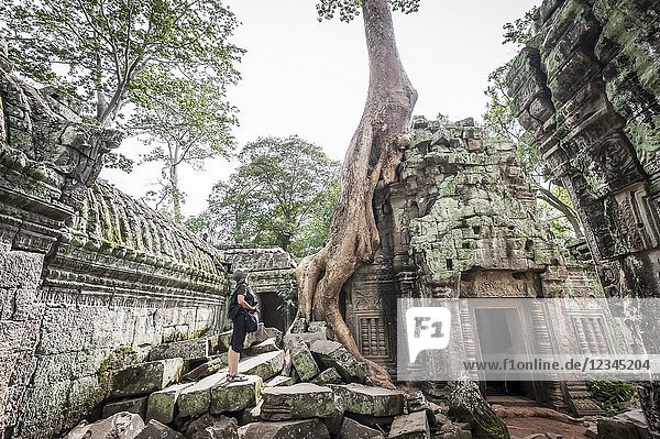 Young tourist watching big tree in Ta Prohm  Angkor compound (Siem Reap Province  Cambodia).