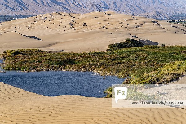 Desert of Ica in Peru  sand dunes and lagoon  South America.