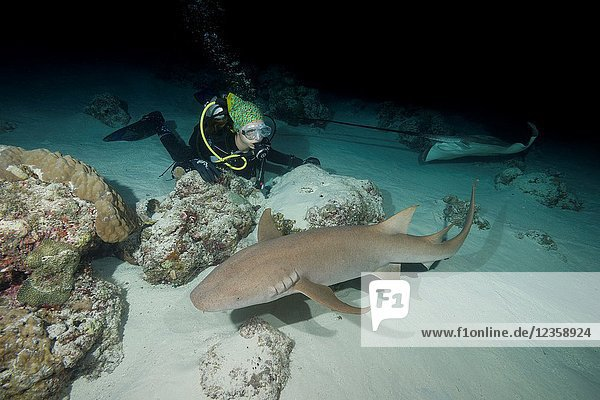 Female scuba diver looks at shark in the night. Tawny nurse shark  Giant sleepy shark or Madame X (Nebrius ferrugineus).