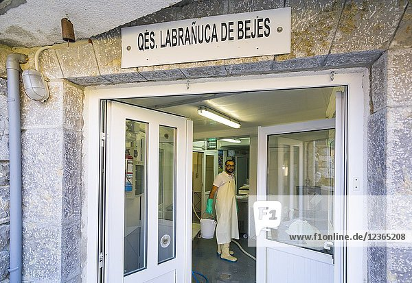Artisanal preparation of Picon Bejes-Tresviso cheese  Bejes village  Liébana Valley  Cantabria  Spain  Europe.