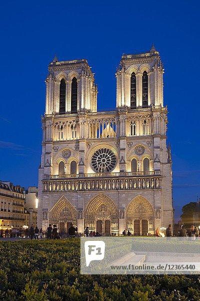 Nightfall in Notre Dame  Paris  Ile-de-france  France.