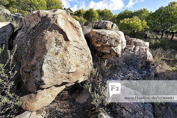 Granite between pines in Alcornocoso hill. Cadalso de los Vidrios. Madrid. Spain.