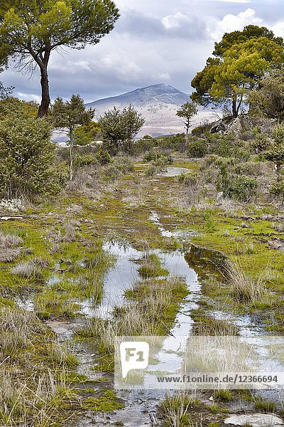 Puddles and pines in The Piquillo and Casillas peak on the background on a cloudy day. Madrid. Spain.
