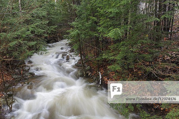 Pollard Brook in Lincoln  New Hampshire on October 30  2017 after hours of heavy rain and strong winds.