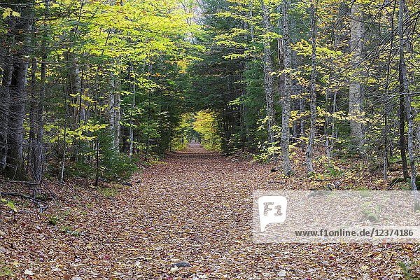 Lincoln Woods Trail in Lincoln  New Hampshire during the autumn months. This trail follows the old East Branch & Lincoln Railroad bed  and because it is flat it attracts many hikers and walkers.
